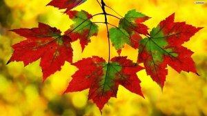 beautiful_autumn_leaves_desktop_wallpaper_hd_12